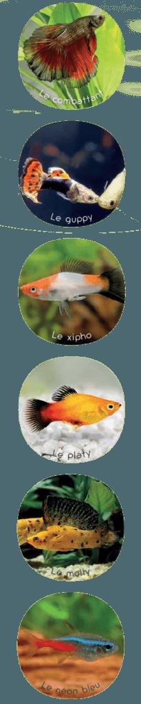 Qu'est-ce que l'aquariophilie ? - Ploubazlanec.fr